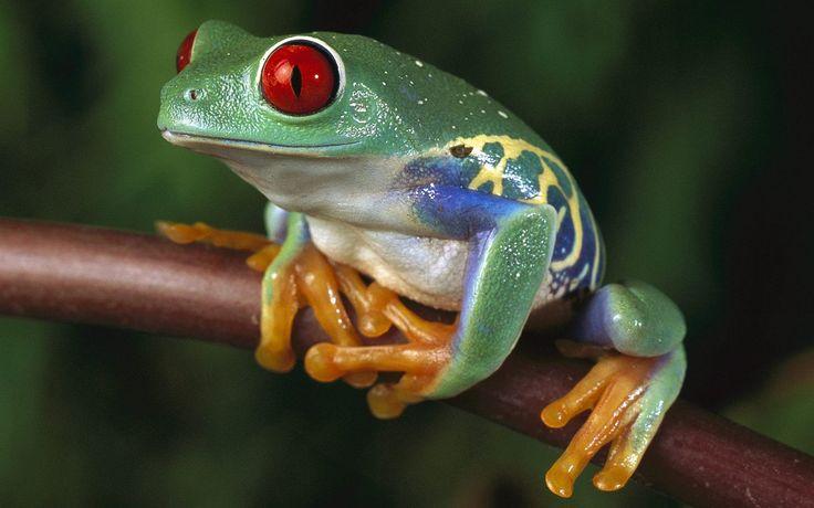 tree frog pic 1080p high quality, 395 kB - Trayvon Black