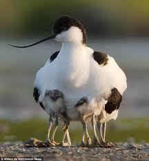 Image result for bird legs