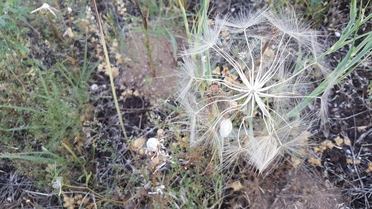 Dağılsada yaprakları yıldızı hiç sönneyen eşsiz doğa  #Gümüşhane #doğa #nature #Türkiye