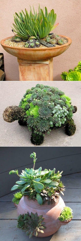 Diy Succulent Garden Ideas Flowers Succulents Pinterest