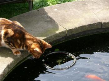 Katten lusten vis, maar houd het in beperking. Het voeren van vis aan de kat is een goede afwisseling op standaard kattenvoer. Gekookt vis is beter dan rauwe.