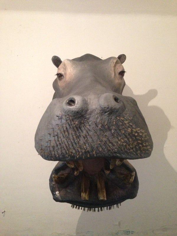Animales Disecados 100% Artificiales Hipopotamo - $ 22,000.00