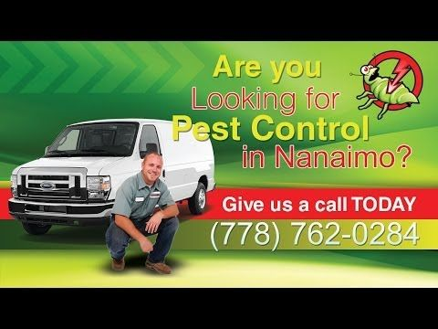 Pest Control Nanaimo, 24 Hour Pest Control Nanaimo, Emergency Pest Control Nanaimo --> http://www.youtube.com/watch?v=nEZ_YKrcptY
