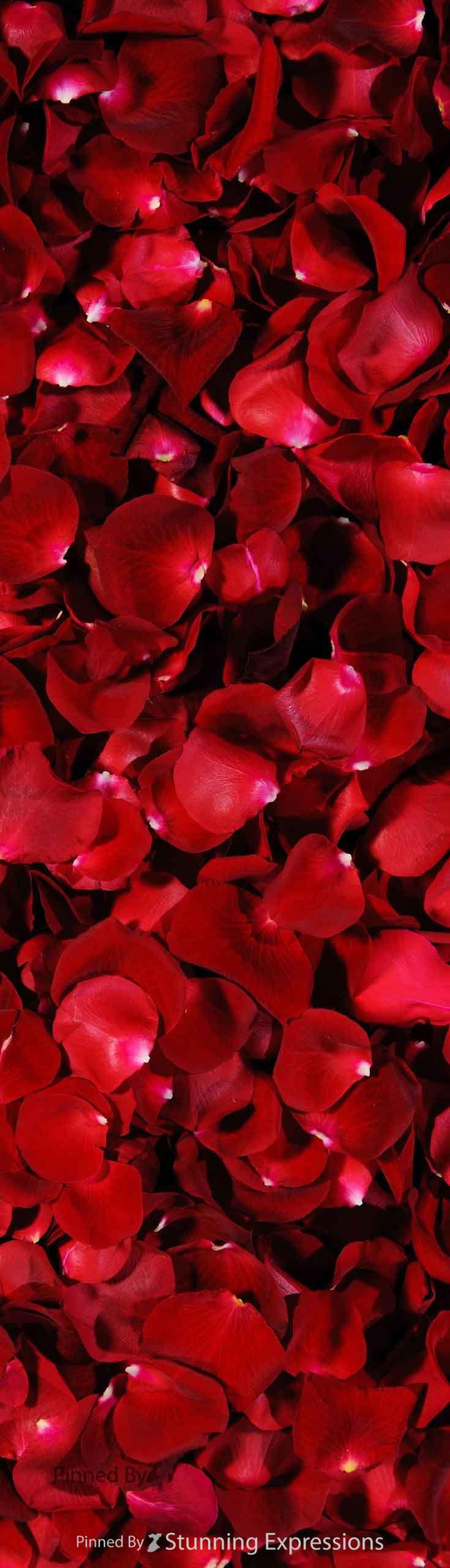 best 25 red rose petals ideas on pinterest red wedding Wedding Reception Centerpiece Ideas Red Wedding Flower Centerpieces