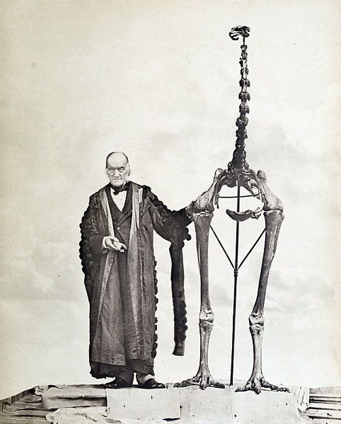 Sir Richard Owen holding the first discovered moa fossil and standing with a Dinornis skeleton