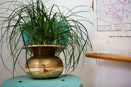 brass spittoon vase & palm