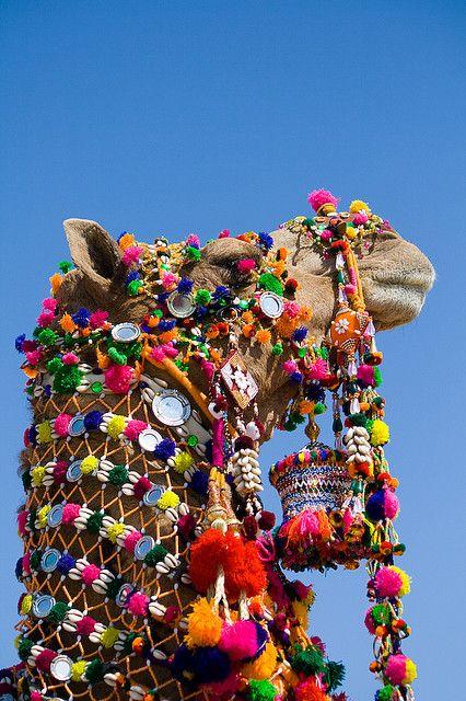 Wedding Camel - India
