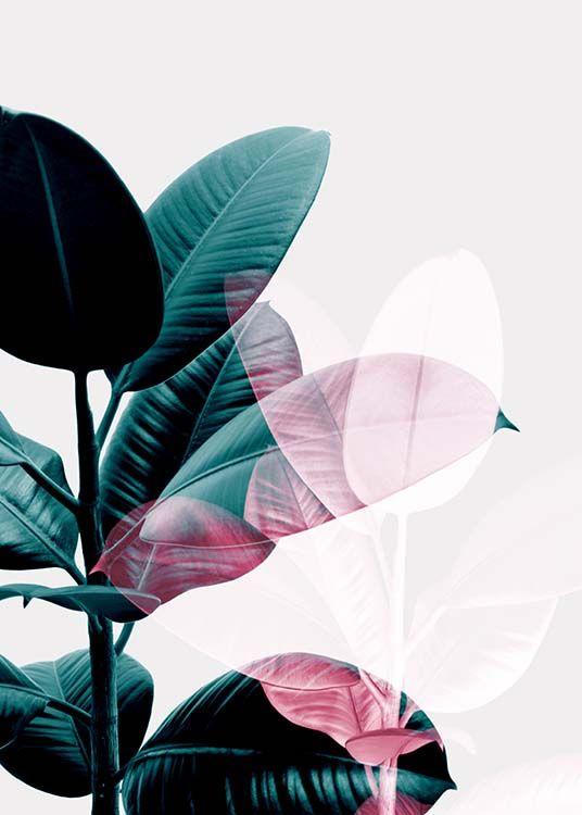 Ficus exposure Poster in der Gruppe Poster / Botan…