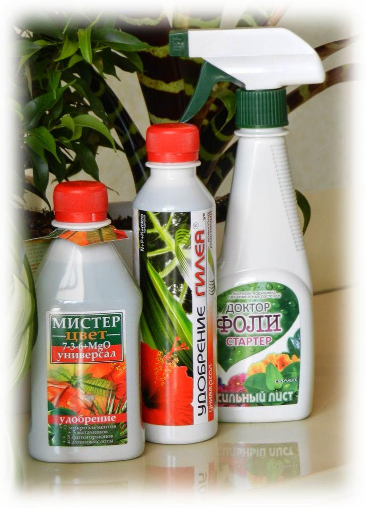 Комнатные растения для души и настроения: Удобрения для комнатных растений Гилея: личный опы...