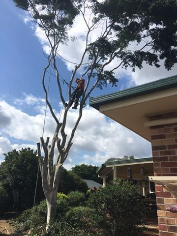 Looking for Tree Lopping Services around Brisbane Southside? Call our certified Tree Loopers Brisbane Southside Treezy Your Local Tree Loopers in Brisbane Southside call now 07 3999 9851 and get quotes http://www.treezy.com.au/  #treeLopping #treeLoopers #treeLoppingBrisbane #treeLoppingBrisbaneSouthside
