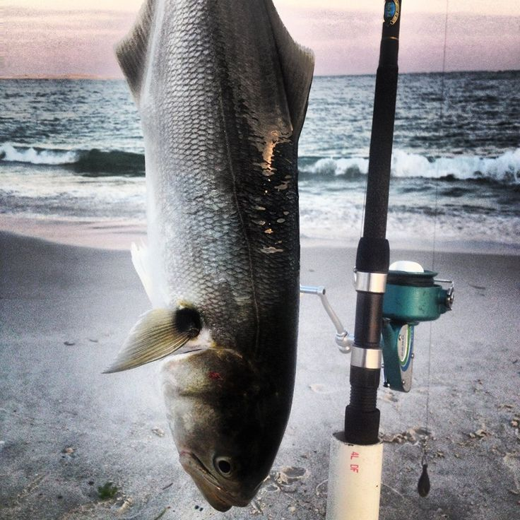 39 best weldon 39 s surf fishing images on pinterest for Outer banks surf fishing tips