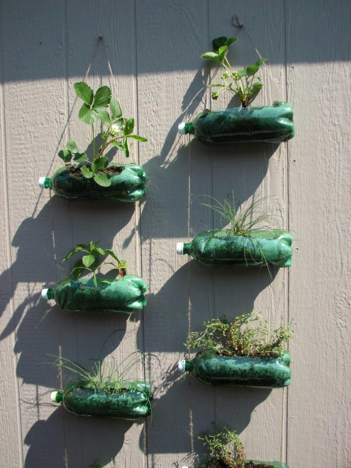 Made from 7Up bottles, string and nails. Perfect for an apartment garden :)