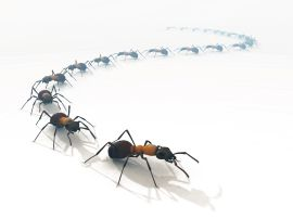 ants - Google Search