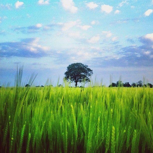 Photo by mojoemofo