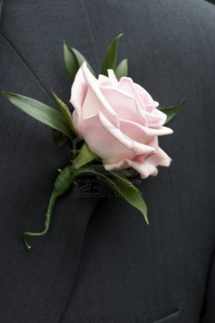 button hole of pale pink rose ( sweet avalanche) and soft ruscus leaves