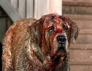 Poor Cujo. It wasn't his fault.: