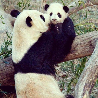 17 best images about a andy panda on pinterest for Andy panda jardin