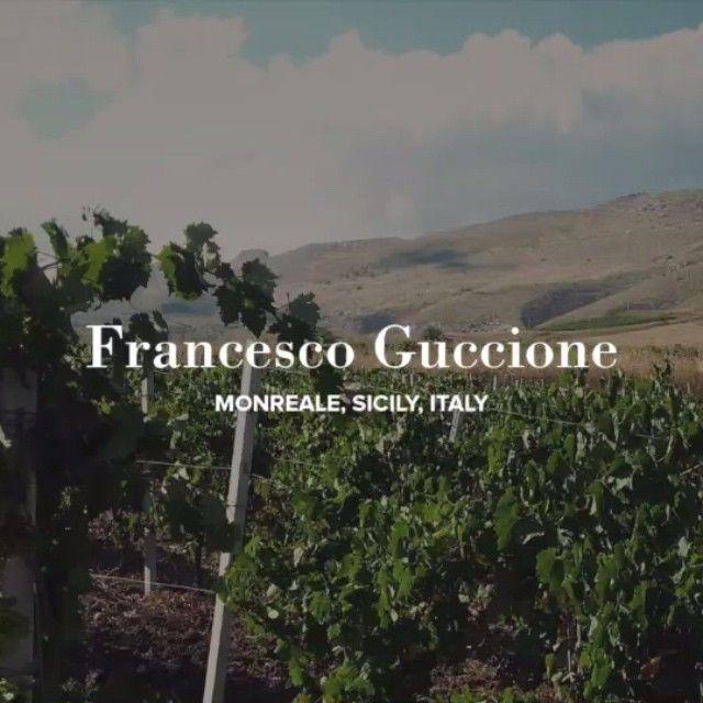 Vino Nostrum, Winery video, Instagram