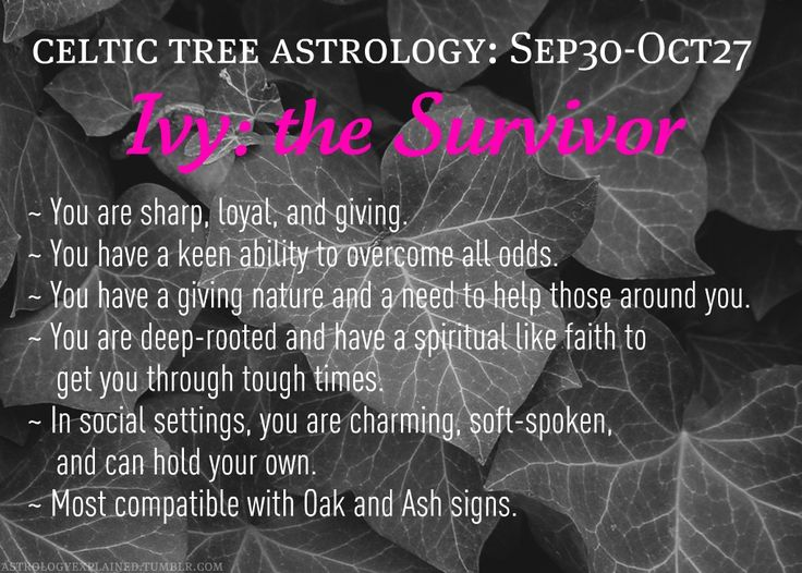 Celtic tree astrology - Ivy