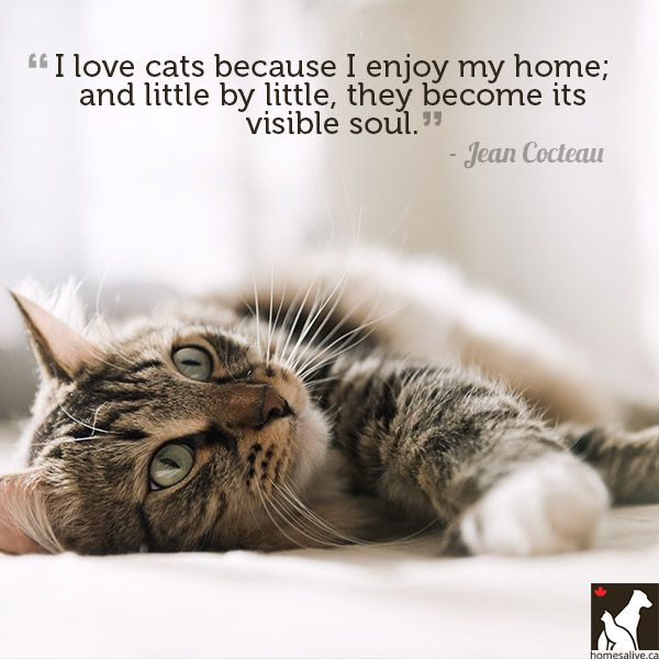 Cat Quotes: 1000+ Cat Love Quotes On Pinterest