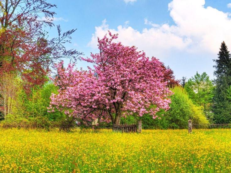 Tavaszi háttérképek 008