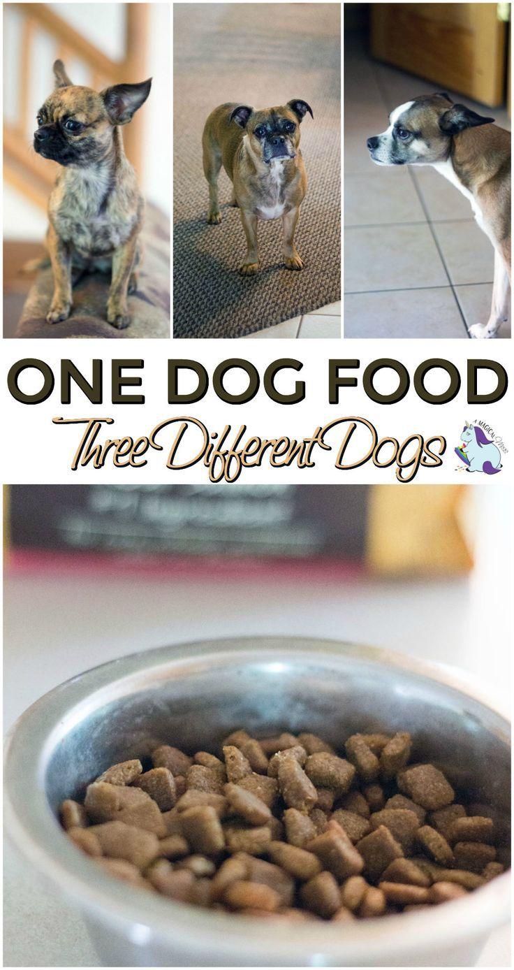 197 best Boston Terrier Love images on Pinterest   Boston terrier ...