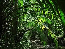 Afbeeldingsresultaat voor jungle background
