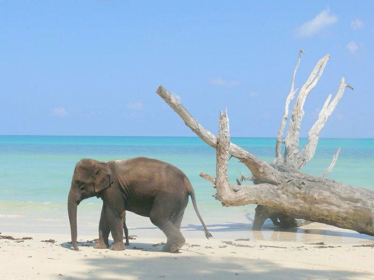 Nuotare con gli elefanti...sull'Isola di Havelock, una piccola isola del Golfo del Bengala, nell'arcipelago delle Andamane – tra India, Thailandia e Birmania e appartenente all'India.