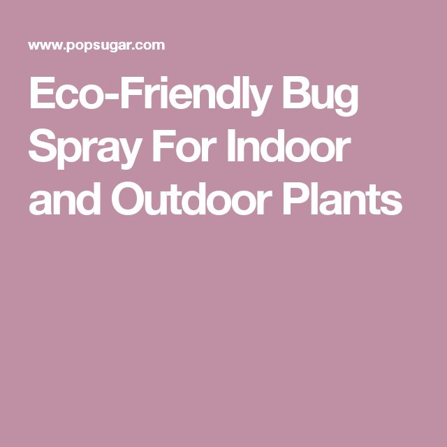 Eco-Friendly Bug Spray For Indoor and Outdoor Plants