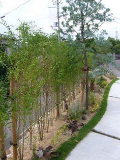 姫路 ボーダーガーデン 生垣 プリペット 7月6日 河辺 道路から玄関までのアプローチに沿って続くボーダーガーデン。 プリペットの生垣を背に楽しさが拡がりますね。