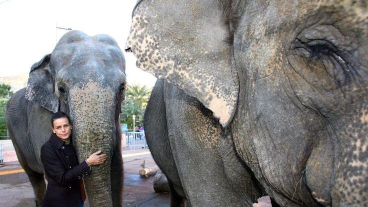 Les éléphantes Baby et Népal en route pour la Côte d'Azur pour rejoindre Roc Agel, la propriété de la famille Grimaldi dans les Alpes-Maritimes.