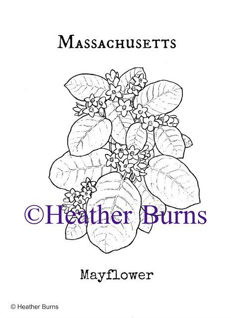 massachusetts mayflower coloring page