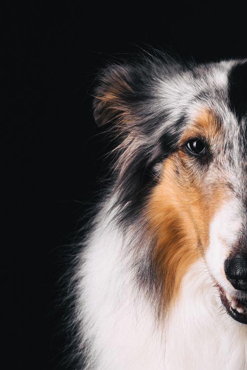 Emma – Pfotentick – dog photography & beautiful things for dogs and owners #pfotentick #neuss #fotografie #hund