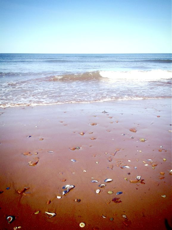 Shells on the red beach of Prince Edward Island