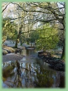 Brockenhurst - New Forest - Hampshire (Recommended by a member of Tulle Nation)