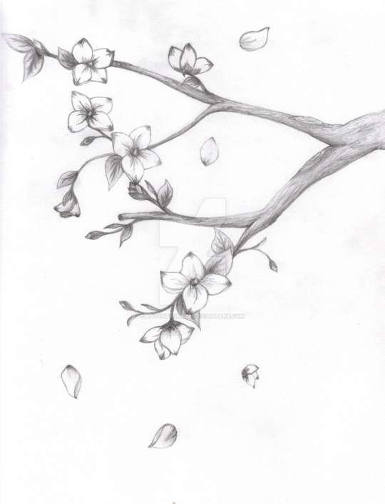 16 Japanese Cherry Blossom Pencil Drawing Cherry Blossom Drawing Tree Drawings Pencil Japanese Blossom