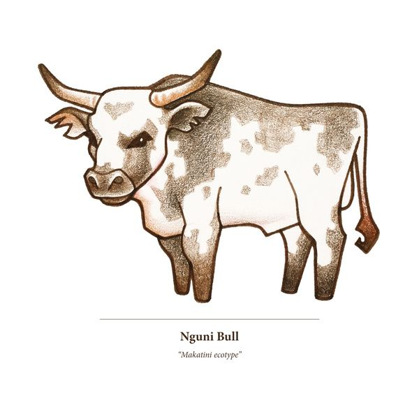 Nguni Bull Art Print