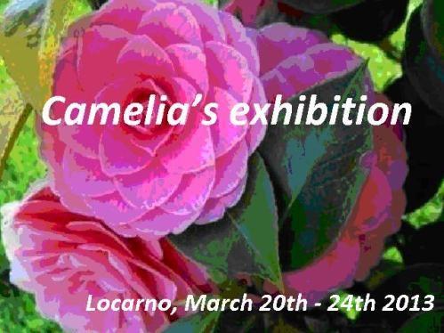 Locarno Camelia Festival 2013