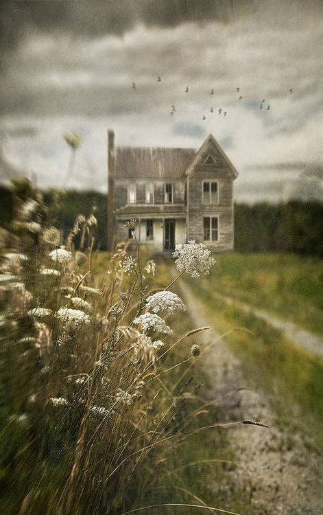 """This""""haunted house"""" complete with overhead flying blackbirds to add life & dark clouds is really a lovely old weathered farmhouse. Great photo composition includes a PATH to the subject, GRAY clouds paralleling the gray house, bright green grass to add a bit of happiness to a rather sad picture of a house that once held happy people and--most of all-- gorgeous closeup detail shot of Queen Anne's Lace wildflowers (wild carrot) in the foreground gives distance perspective. -DianaDee Osborne"""
