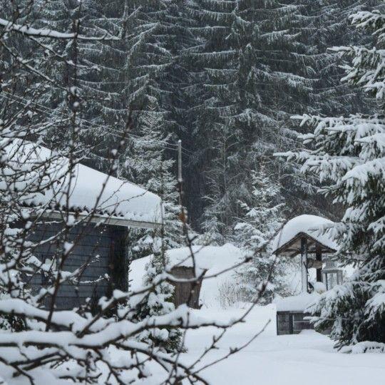 Luminen kotipiha