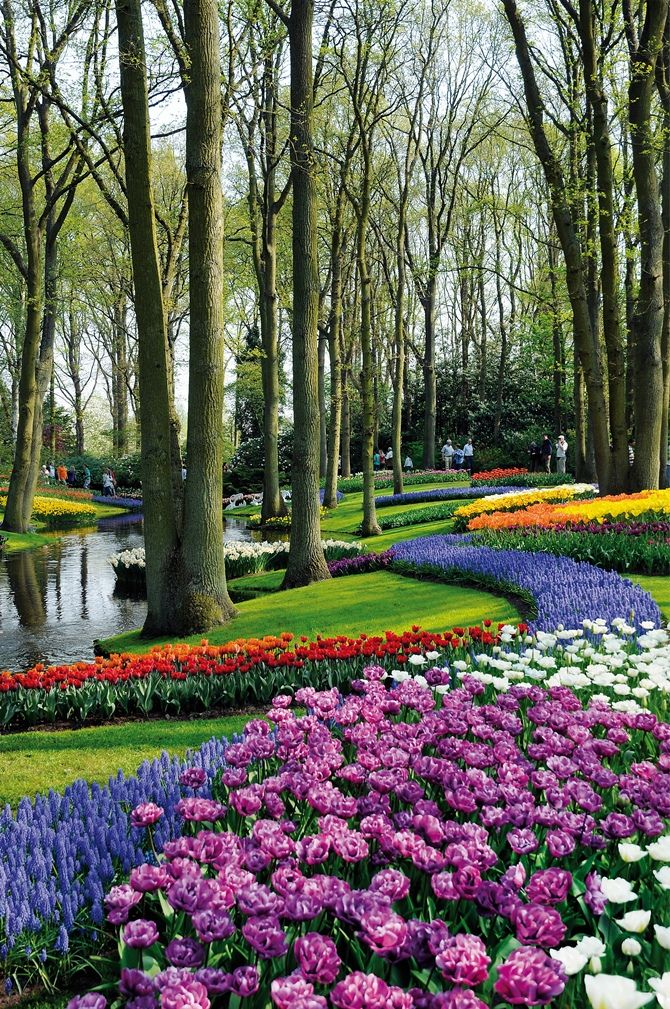 Keukenhof, The Netherlands--the most beautiful spring garden in the world!