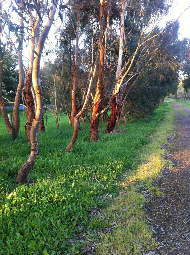Rail Trail near to The Estate Koroit boutique hotel, a most tranquil journey travelling towards Port Fairy. Image by The Estate Koroit Tia Wood