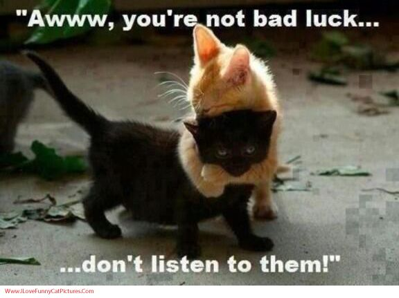 Funny Hilarious Cute Cat and Kitten Pictures #Cat # ...