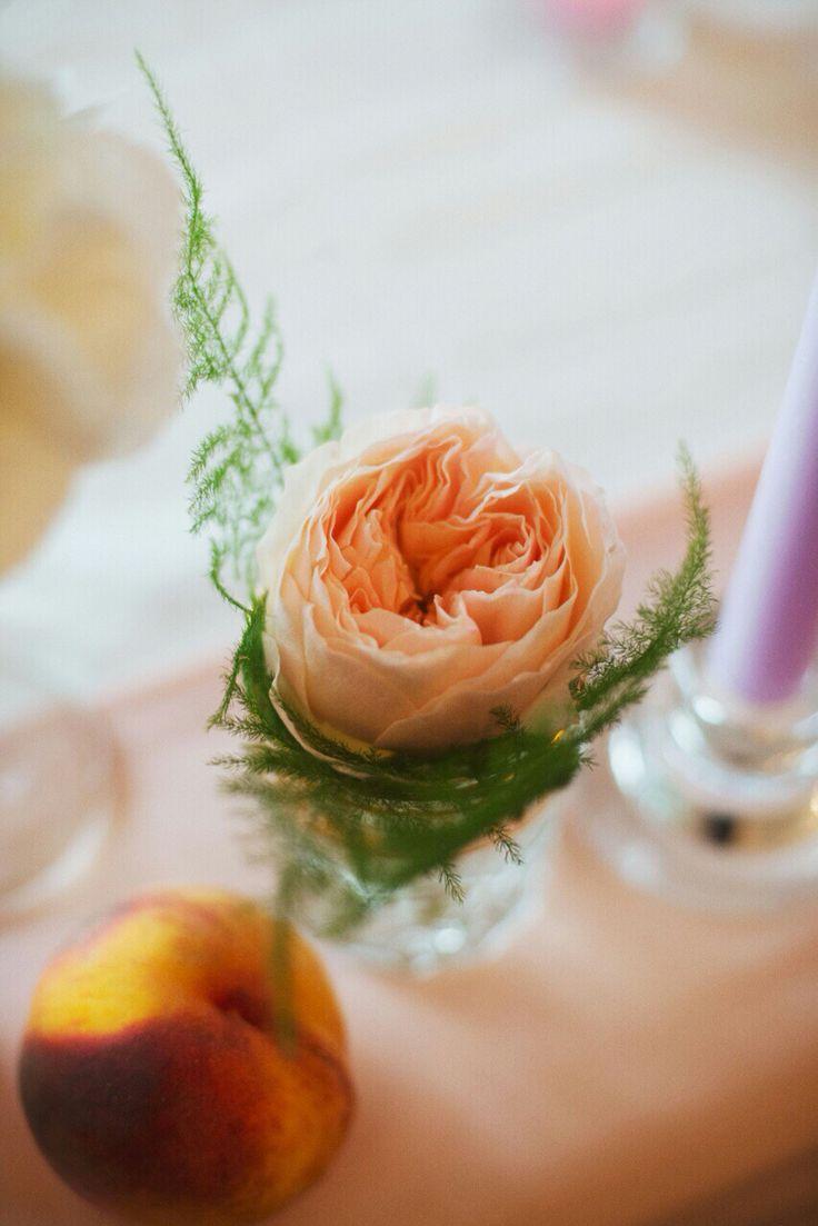 Juliet roses .. So simple and elegant ..