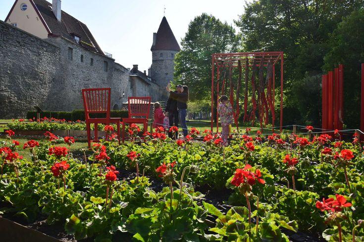 """Kolme kuukautta kukkaisloistoa ja inspiraatiota puutarhaan. Sitä on 26.5. - 25.8. Tallinnan kukkaisfestivaalilla Vanhassakaupungissa sijaitsevalla Tornien aukiolla. Voit  seurata, millaisia ovat puutarha- ja maisemasuunnittelun trendit. Mukana on sekä virolaisia että kansainvälisi puutarha-alan ammattilaisia. Tänä vuonna teemana on """"perhepuutarha"""" sekä """"yhden värin puutarha"""". Aukiolla järjestetään myös konsertteja. #eckeröline #kukkaisfestivaalit."""
