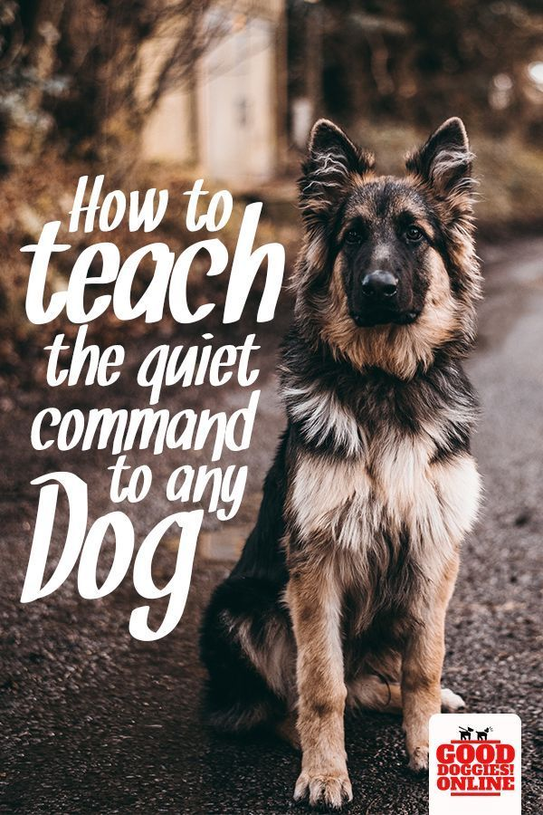 How To Teach The Quiet Command And Get Your Dog To Stop Barking