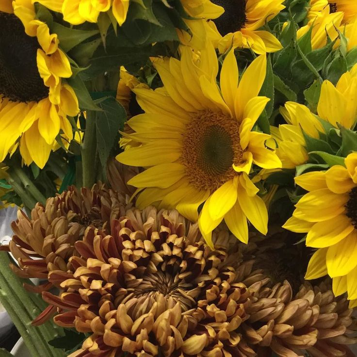 #mums and #sunflowers doesn't this pic just scream #fall #flowers  #yellow #brown #orange #gold #happy #monday