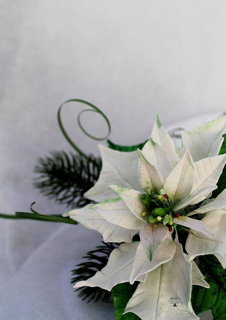 white Christmas star flower