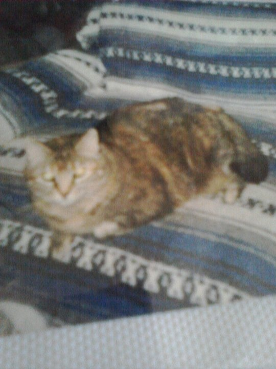 this was my lovely Tortoiseshell Tabby Rosie she passed away on May 26th, 2000 on my youngest nephew's 13th birthday, she lived for 18 years and I got her as a kitten, and I still miss her