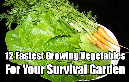12 Fastest Growing Vegetables, gardening, food, growing, garden, survival, prepping, survival garden,